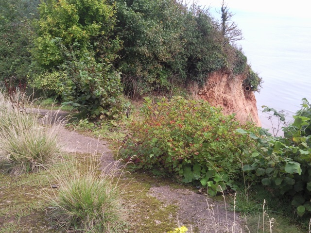 A section of overgrown old road, half slipped into the sea