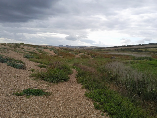 The inland side of the Chesil beach shingle bank, shading into beach vegetation and then fields