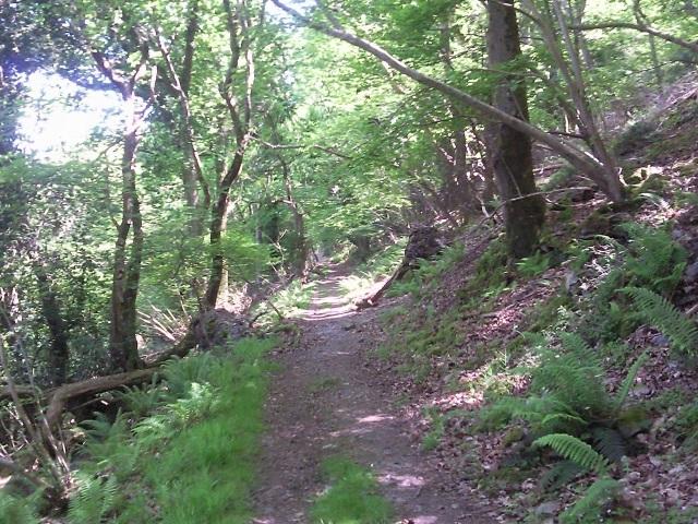Wooded coastal slope in Culbone Wood