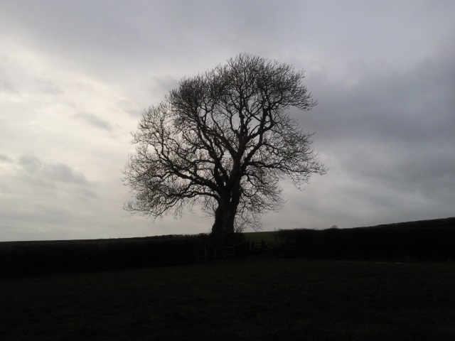 Dramatically silhouetted tree