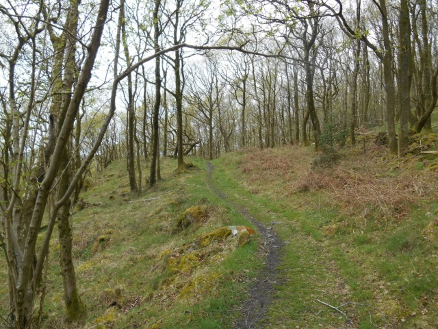 Path through the wood. The sky is overcast.