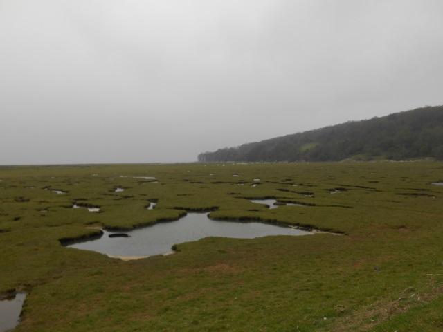 Lindeth Marsh