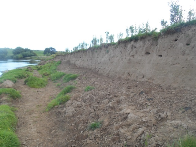 Collapsed bank on the River Eden