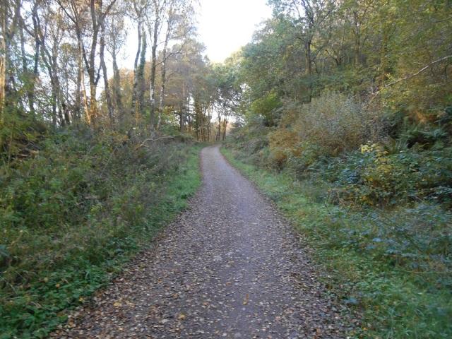 Path through Dalbeattie Forest