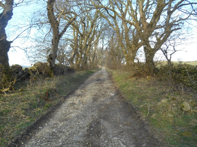 Tree-lined track to Deer Park