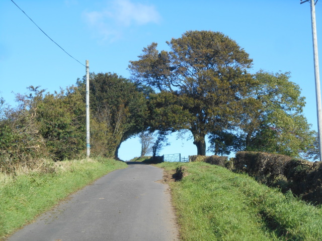 Tree arch over the road