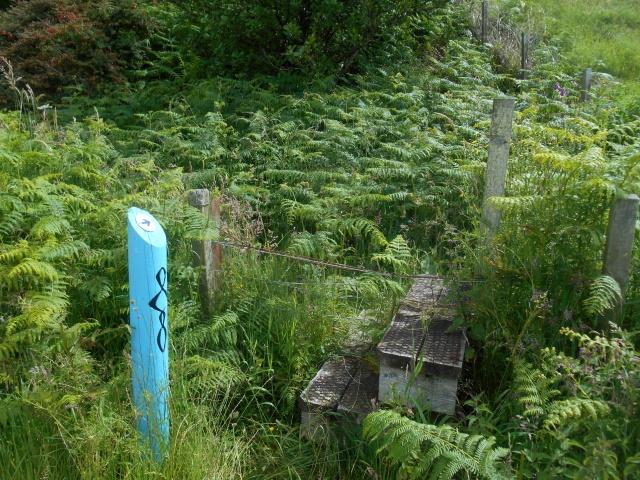 Path overgrown with bracken