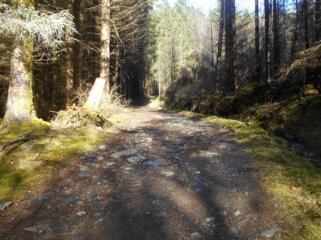 Broad track through woodland.