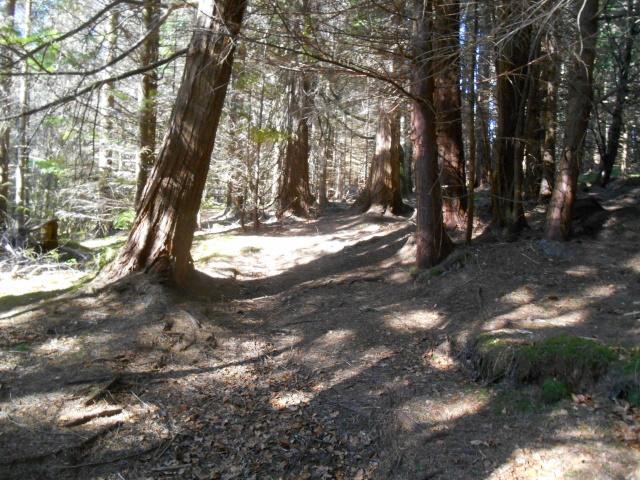 Ardaneaskan Wood