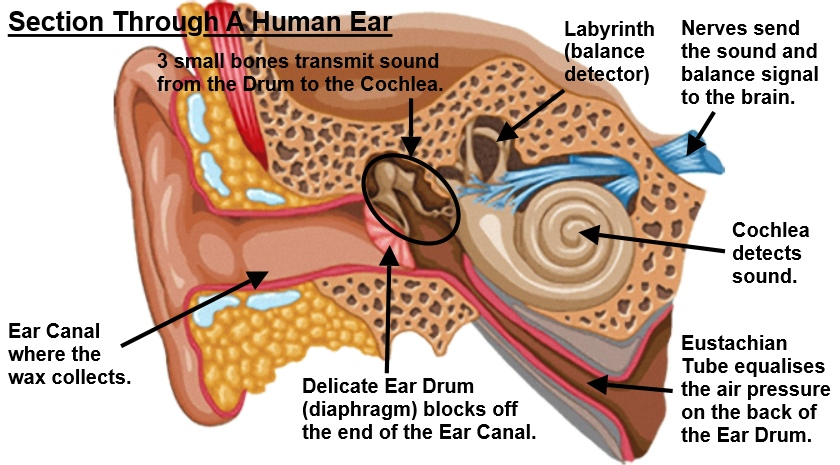 Earwax? What's That All About?