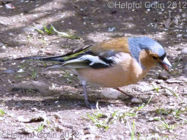 northumberland wildlife