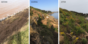The BIG Impact of Living Shorelines