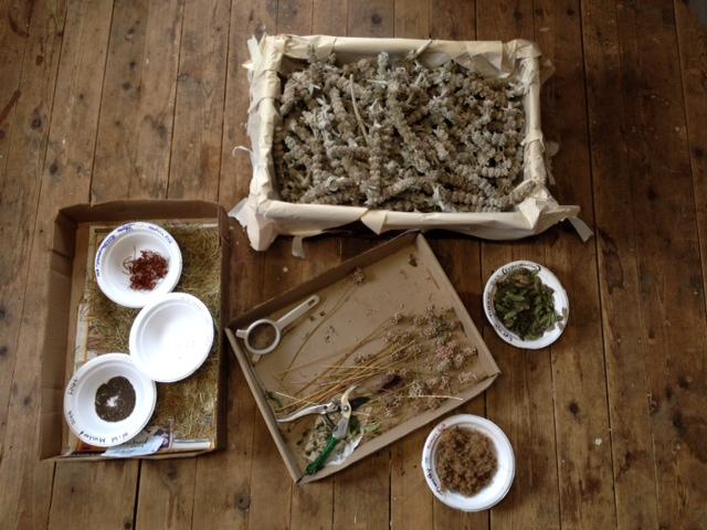 HNH Species Stockyard – Enviro Commitment