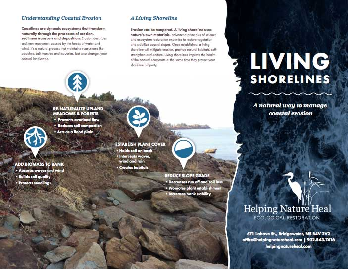 Living Shorlines information brochure
