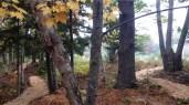 wood-chip-trail-bg