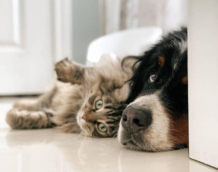 koira ja kissa makaavat lattialla