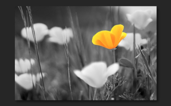 Combine black and white with color in a photo   Adobe ...