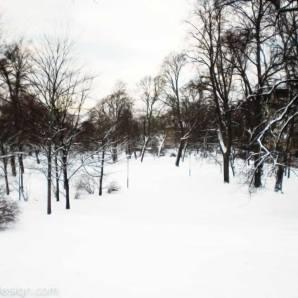 20150112-kaivopuisto-CIMG0729