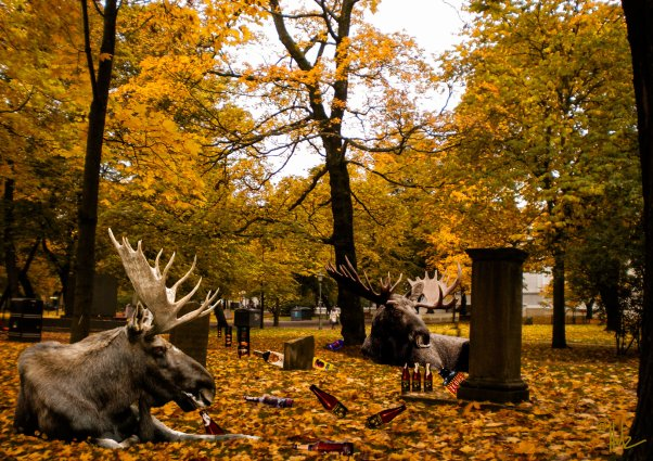 Helsinki secrets revealed: perjantainpullo – or young mooses at vanhan kirkkopuisto