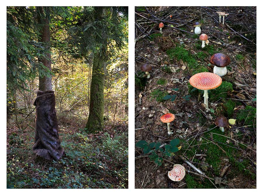 Homage to Mere Oppenheim & poisonous mushrooms from the series Bear Girls by Ute Behrend
