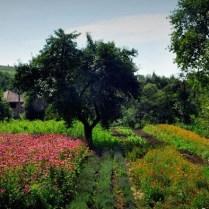 Szentábrahámi gyógynövényes kert