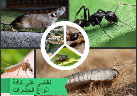 الحشرات التى تقضى عليها شركة مكافحة ,نمل,صراصير,البق,الفئران ,الناموس