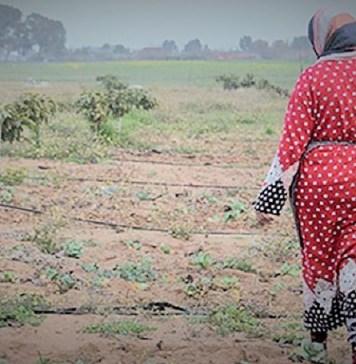 Une vue de l'espace terrestre de la communauté des soulaliyates dans le Royaume du Maroc © Actualité société / HA