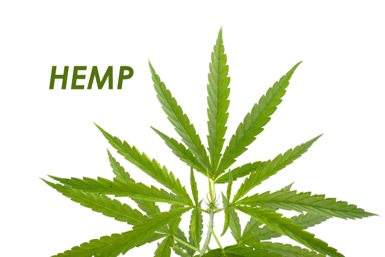 What is Hemp ?