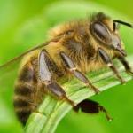 Study Shows That Bees Like Hemp, And That's Great News For The Environment