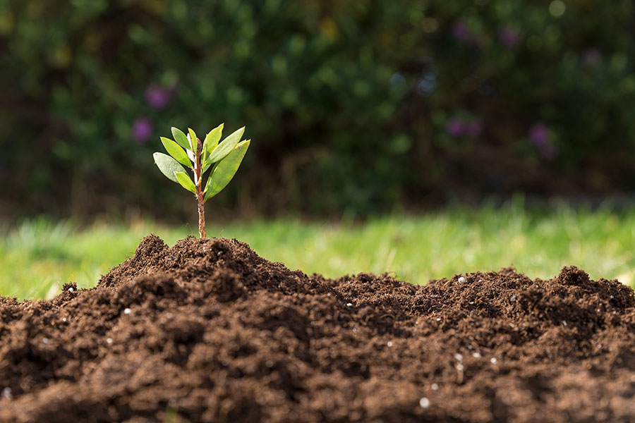Phytoremediation – Nature's Peaceful Solution To Industrial Pollution