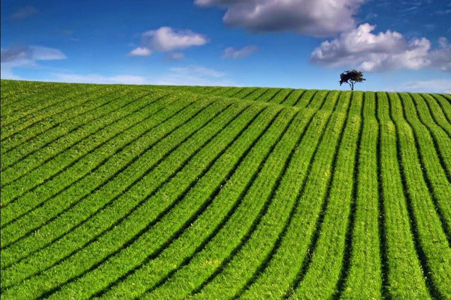 Three Potential Paths For Farming Hemp