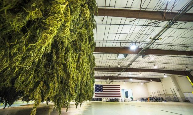 Industrial Hemp Is The Answer To Petrochemical Dependency