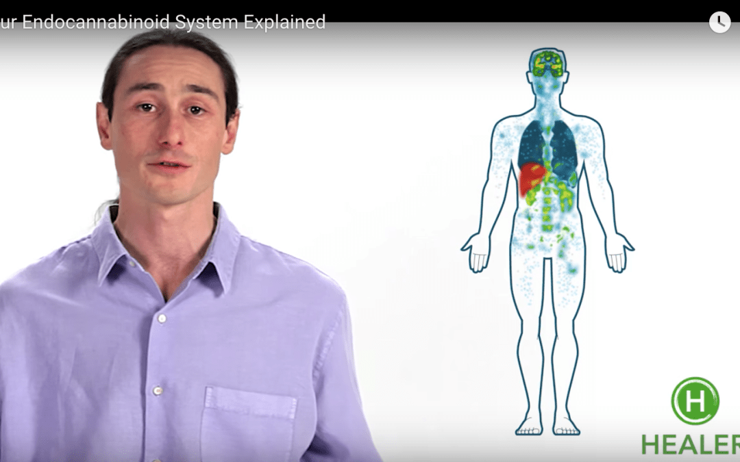 The Endocannabinoid System and How It Balances Our Mind, Body Spirit?