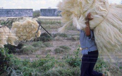 Levi's found a way to make Hemp feel like cotton…