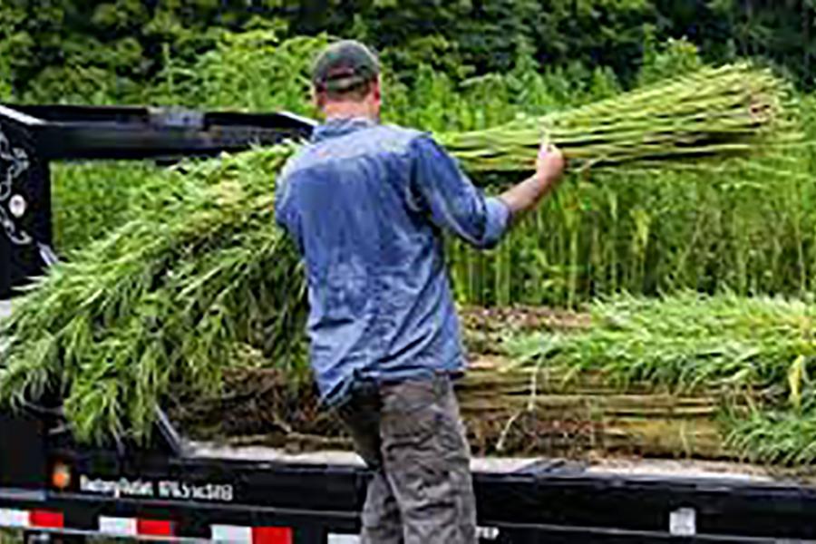 Hemp poised to become major crop