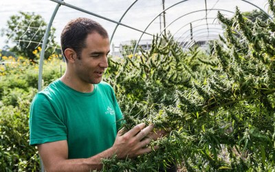 SC Hemp Farming Could Top 3,000 Acres as States Scramble for a Piece of the Booming Market
