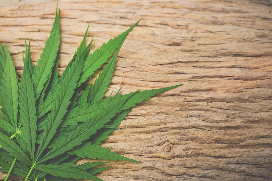 Cannabis Heals Skin Cancer in 3 Weeks
