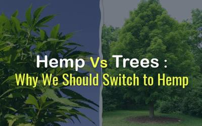 Hemp Paper is now the choice. Cut down more forest, or grow Hemp?