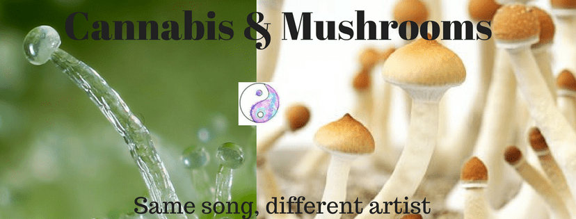 Magic Mushroom Advocates Seek to Emulate the Rise of CBD