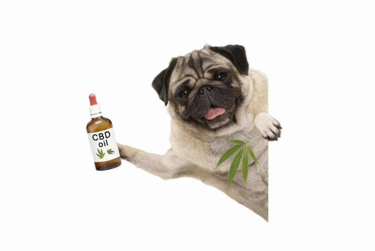 CBD pet market sees soaring sales