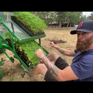 How To Plant A Field Of Hemp for 2020