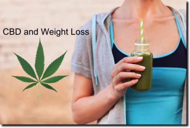 Did You Know Hemp Seeds Can Help You Lose Weight?