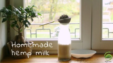 Homemade Raw Hemp Milk with Honey