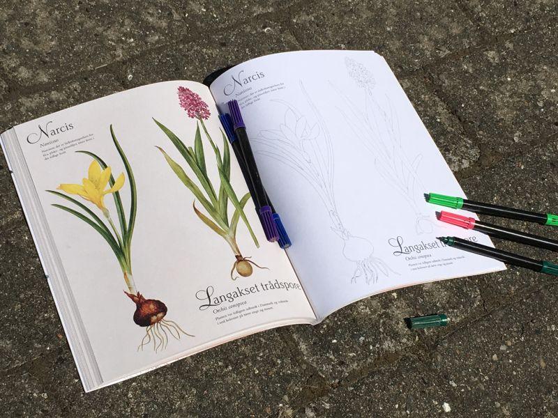 Min flora i farver - Bogfinkens bogblog