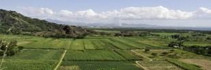 Sugar fields