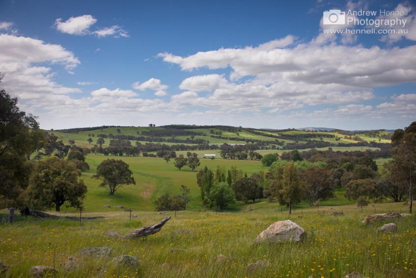 Rolling hills, Pulletop, NSW.