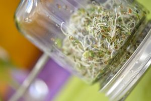 sprouts-jar.jpg.653x0_q80_crop-smart