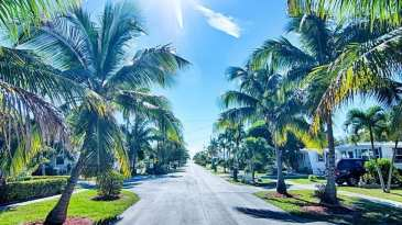Florida Street Surrounded By Palm Trees And Beautiful Houses.