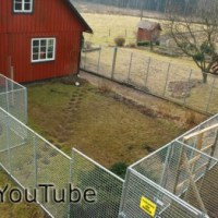 Tips om hur du bygger en hundgård: