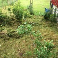 (O)gräset må vara grönare på andra sidan...
